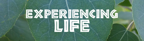 Experiencing Life